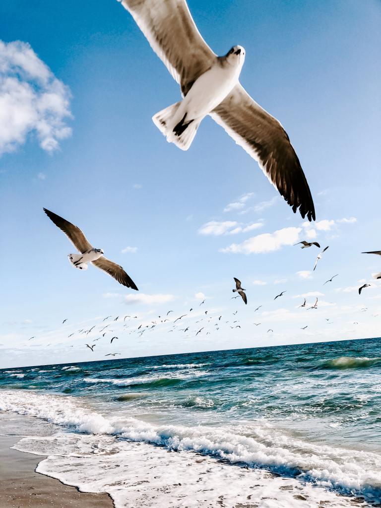 Se liberer de ses croyances limitantes et oser vivre la vie qui nous ressemble
